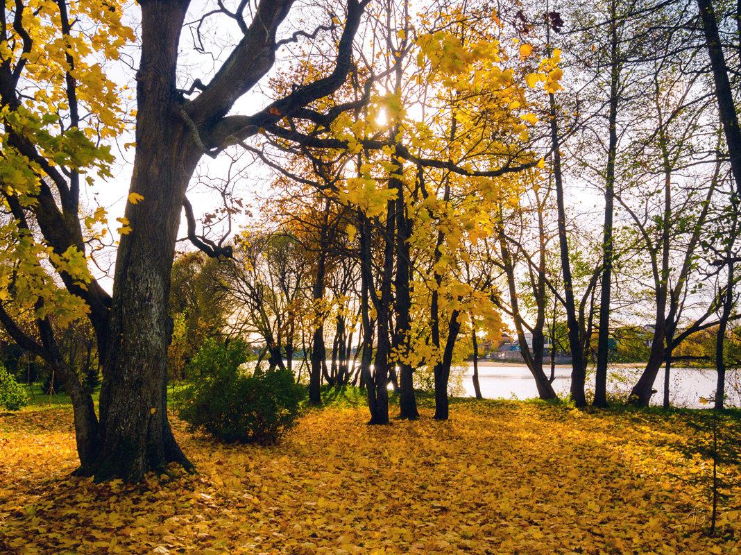 Осень в пригороде 2 - Виталий