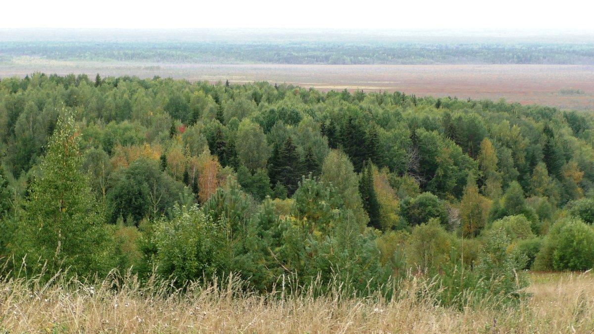 Вид на Селищенское болото - Ирина Останина