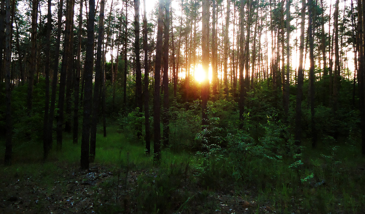 Вечер в лесу - Виктория Власова