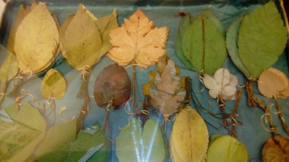 Засушенные листья для составления сухих букетов. Эта коллекция листьев была собрана в начале 20 века - Светлана Калмыкова