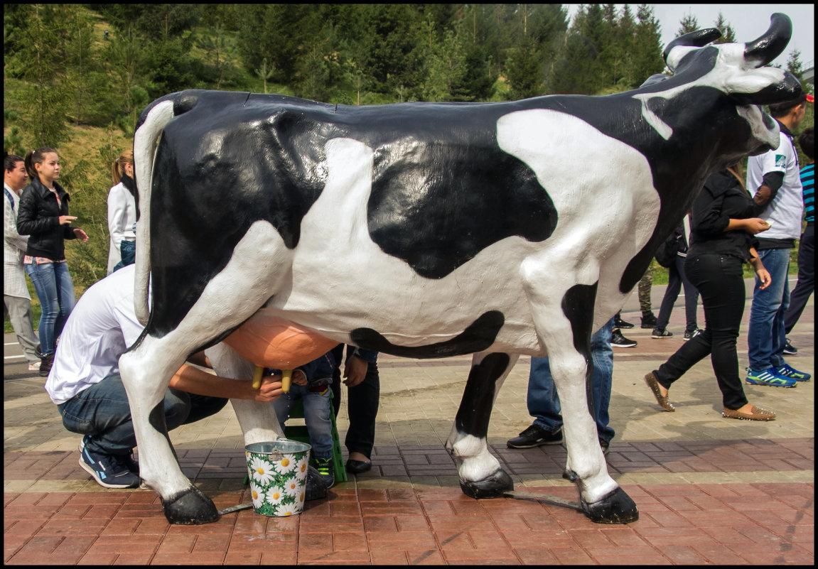 Фестиваль Молочная страна - Алексей Патлах