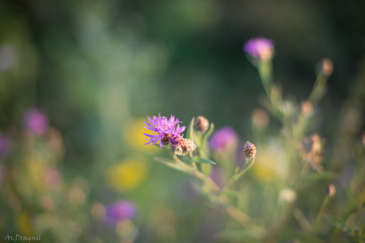 Цветочки - Астарта Драгнил