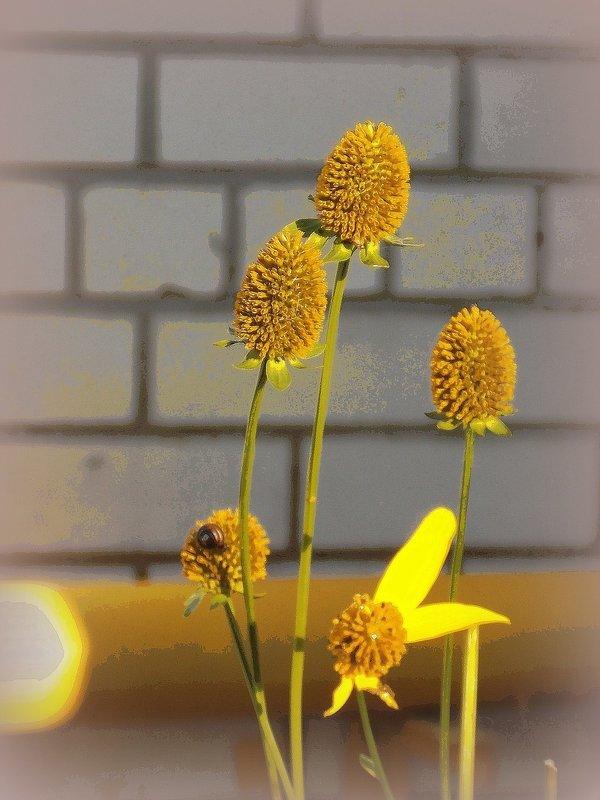 Цветы у дома облетают - Фотогруппа Весна.