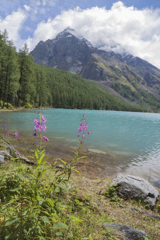 цветы хороши летом...и всегда:) - liudmila drake