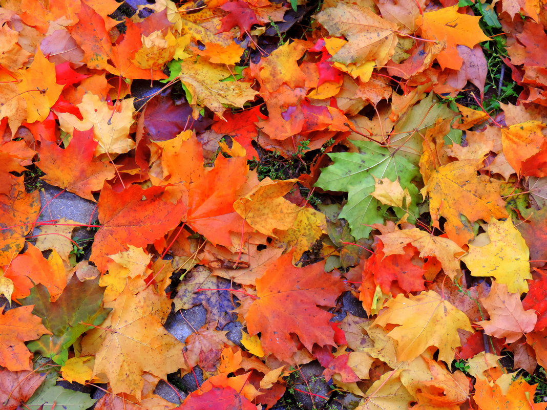 Осенние краски - Елена Якушина