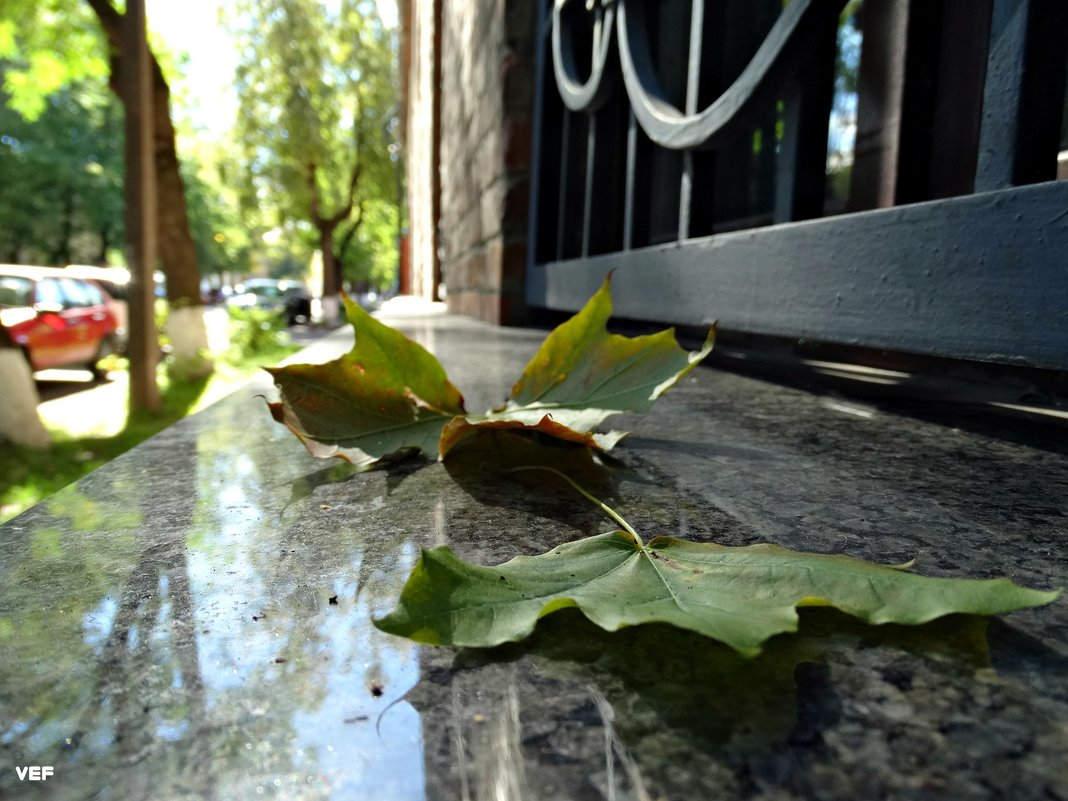 Осень - Fededuard Винтанюк