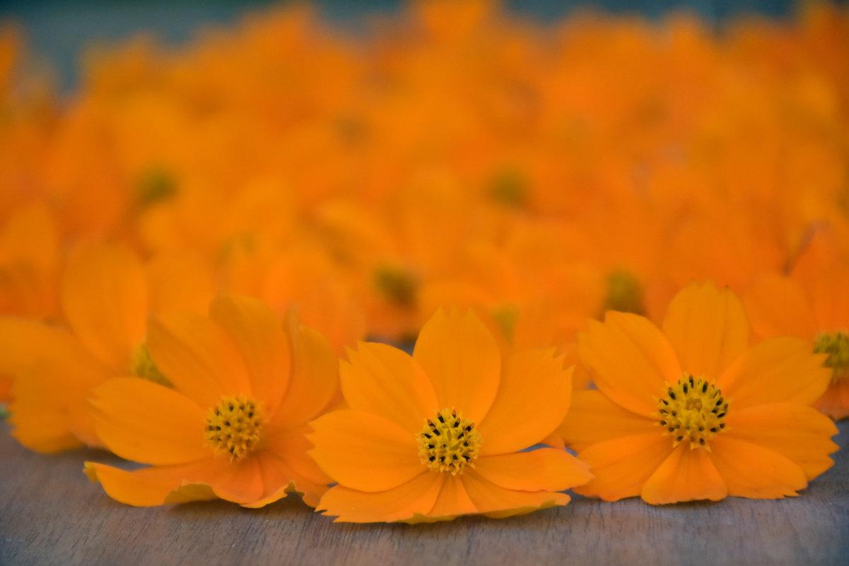 Цветочное пламя - azer Zade