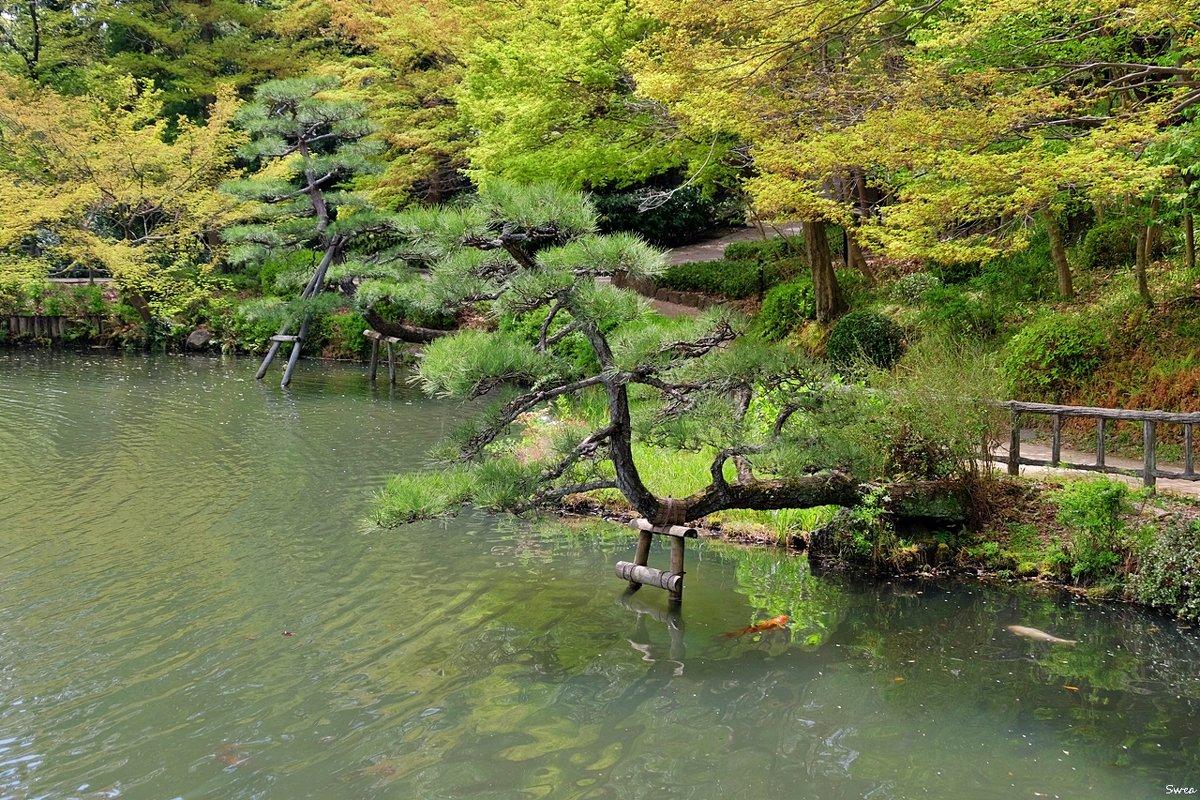 Нагоя ботанический сад Higashiyama - Swetlana V