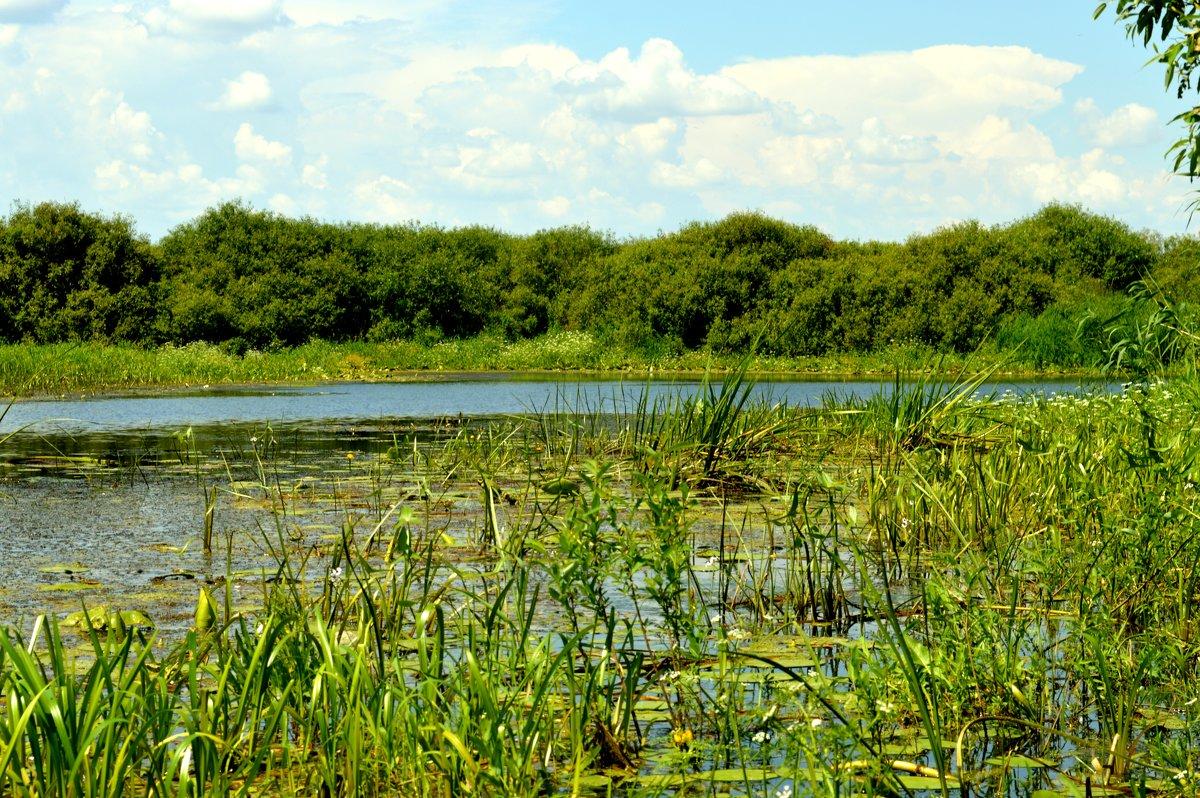 Озеро2 - владимир ковалев