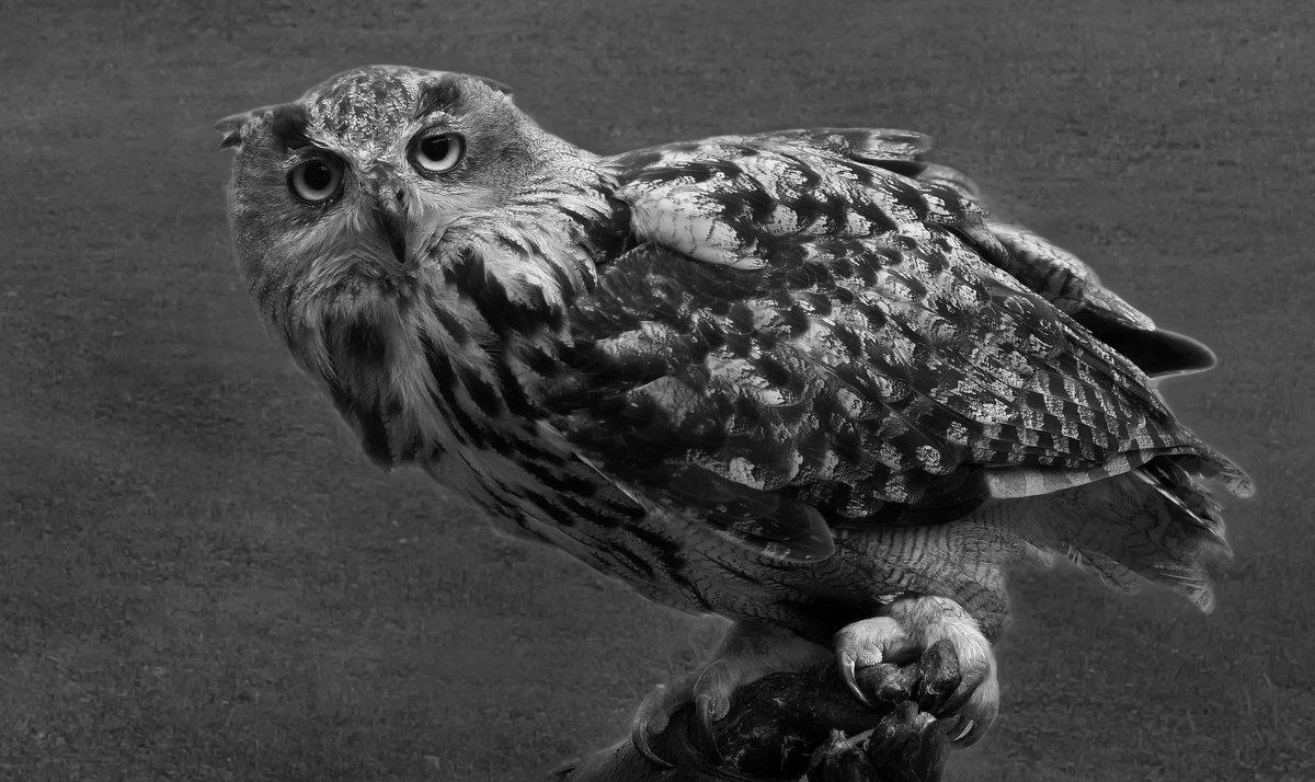 Ночная птица - Татьяна Кадочникова