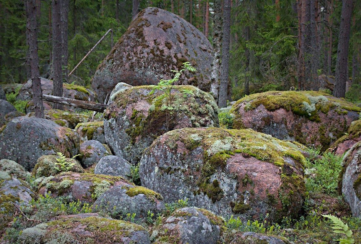 Лесные обитатели - Константин