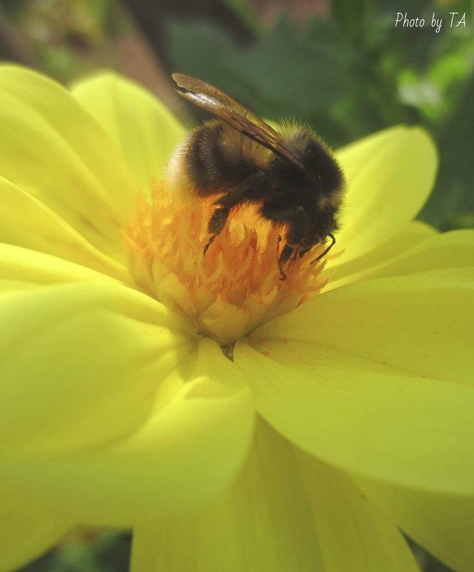 пчелка - Александра Тетерина
