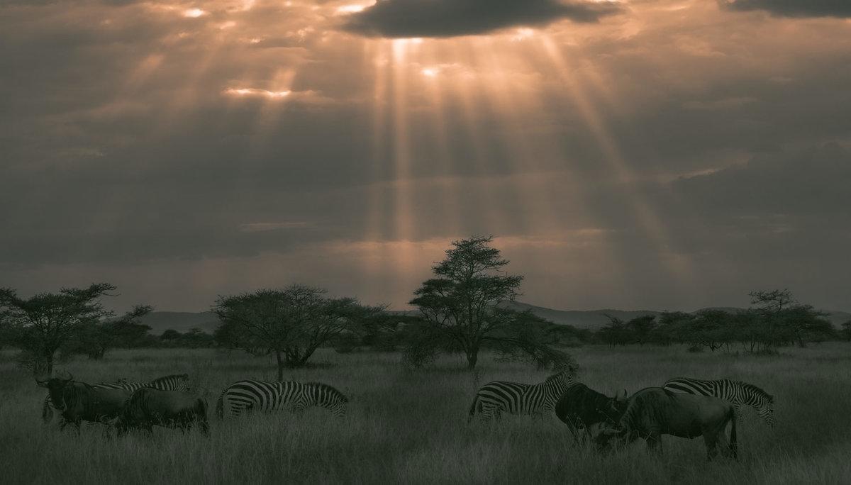 Гармония саванны!...Танзания. - Александр Вивчарик