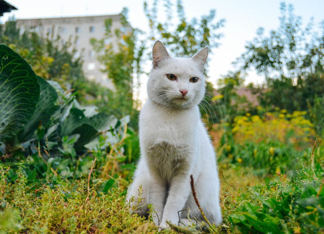 Белый житель города - Света Кондрашова