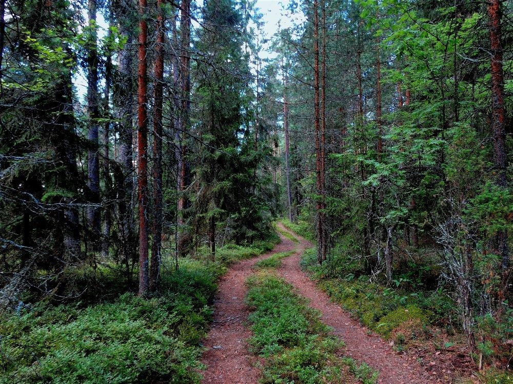 Изгиб дороги - Svetlana27