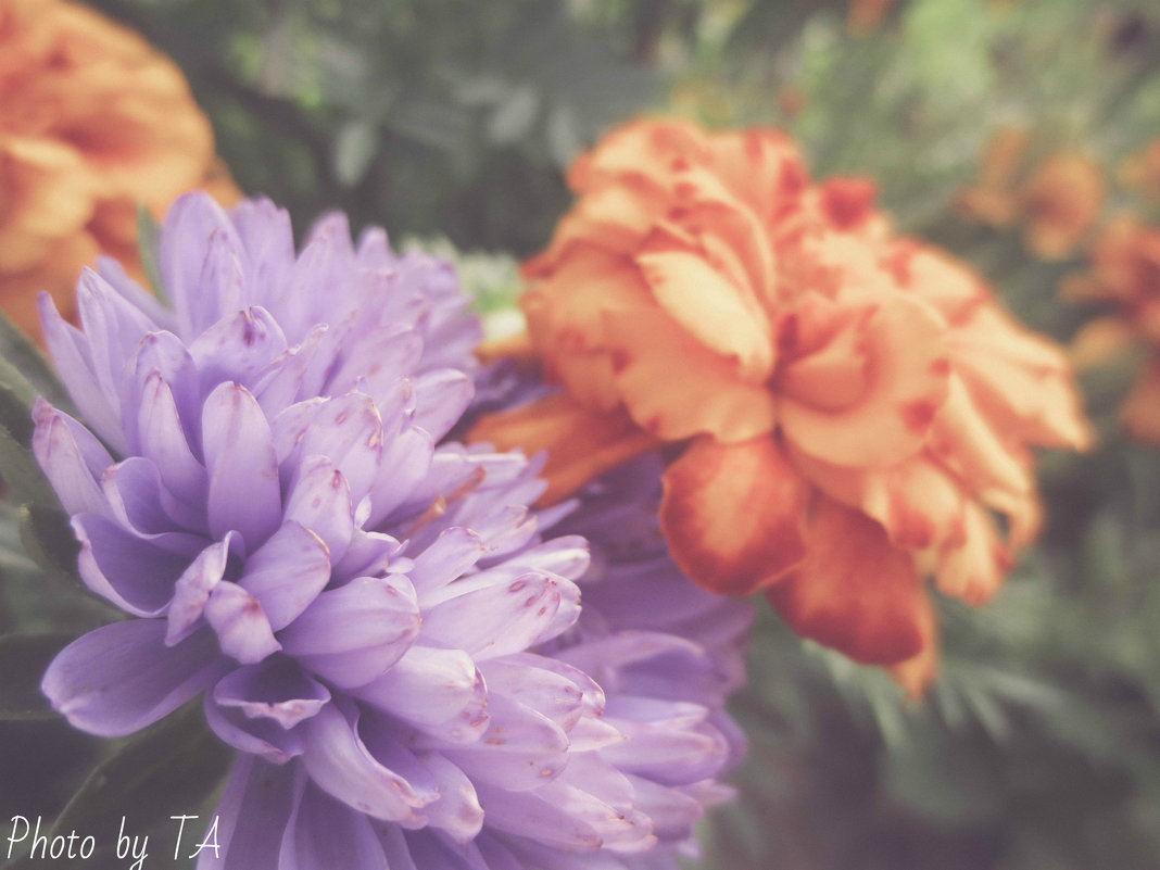 цветы - Александра Тетерина