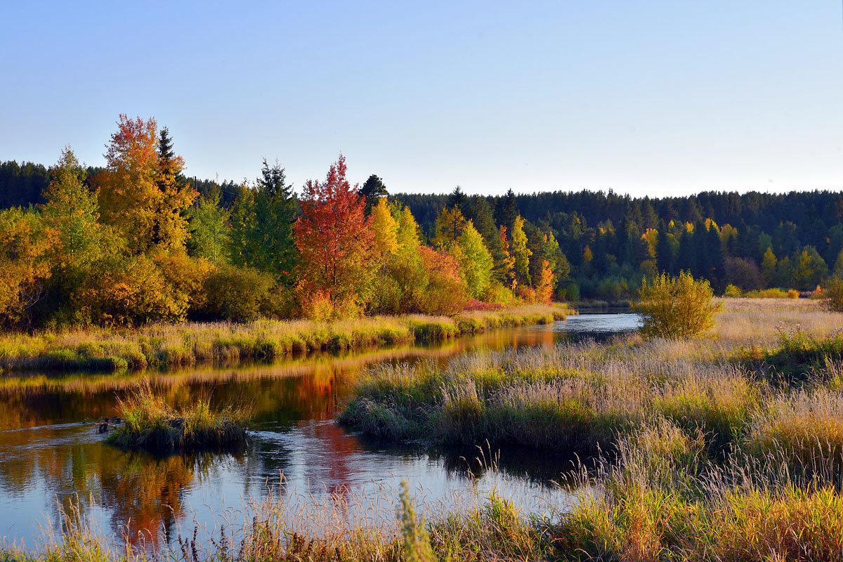Осенний берег. - Наталья