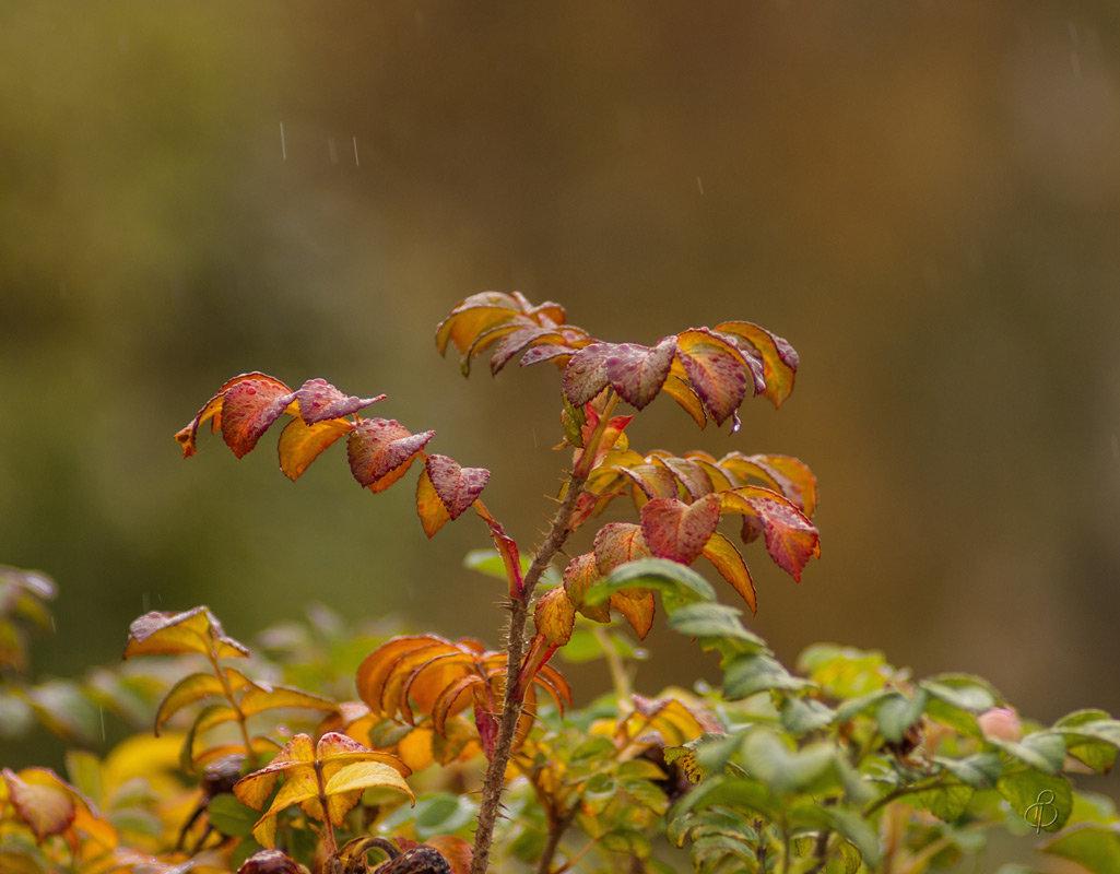 Под дождиком - Виталий