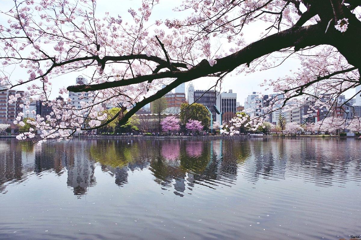 Токио Парк Ueno - Swetlana V