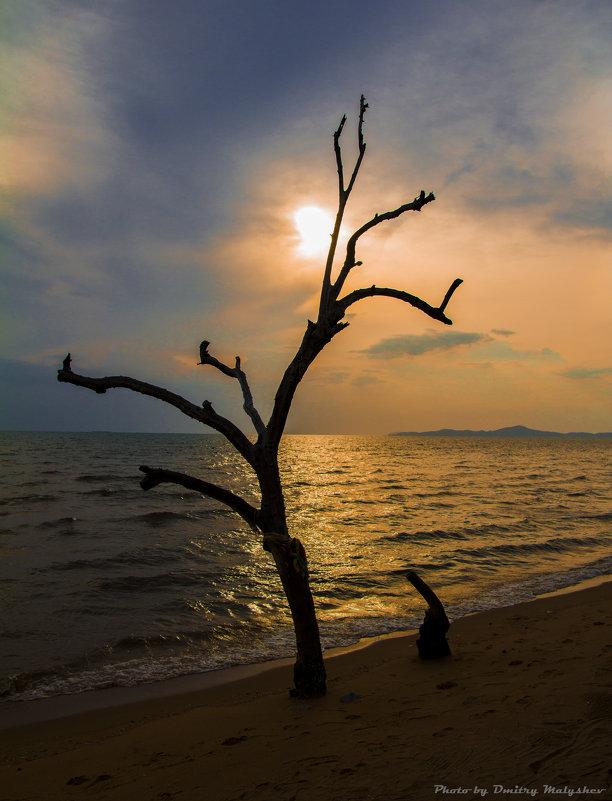 Закат на островах - Дмитрий Малышев