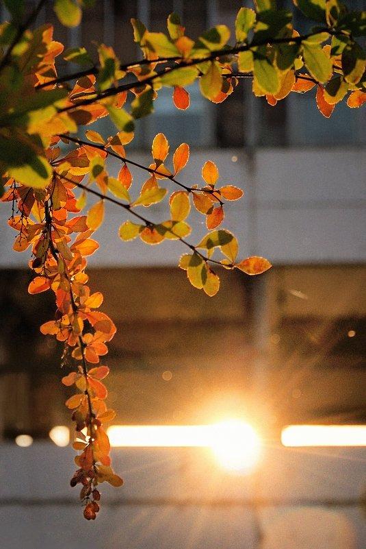 Осенняя зарядка - Mike214
