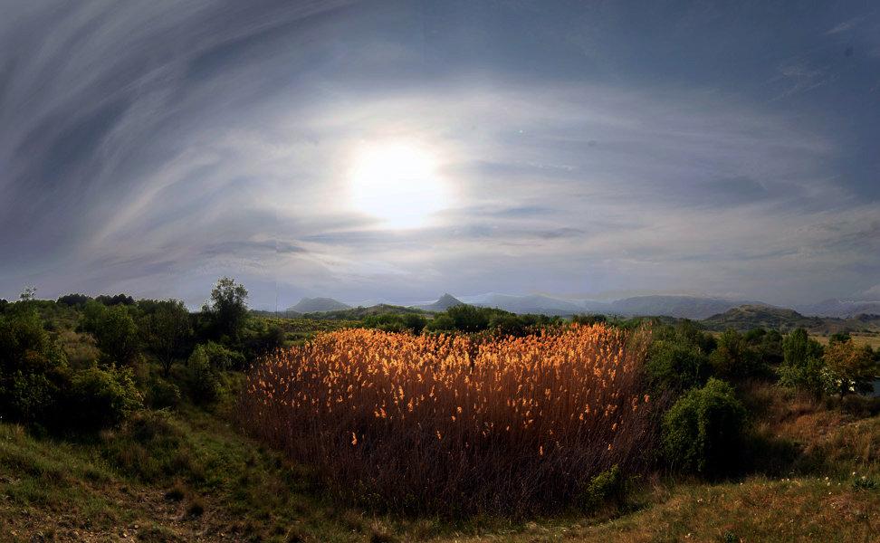 остров золотых колосков - viton