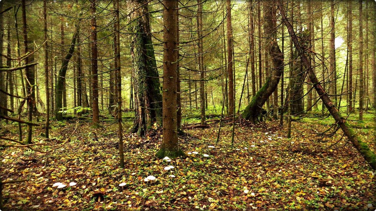 """""""Я в осеннем лесу собираю грибы..."""" - Елена Швецова"""