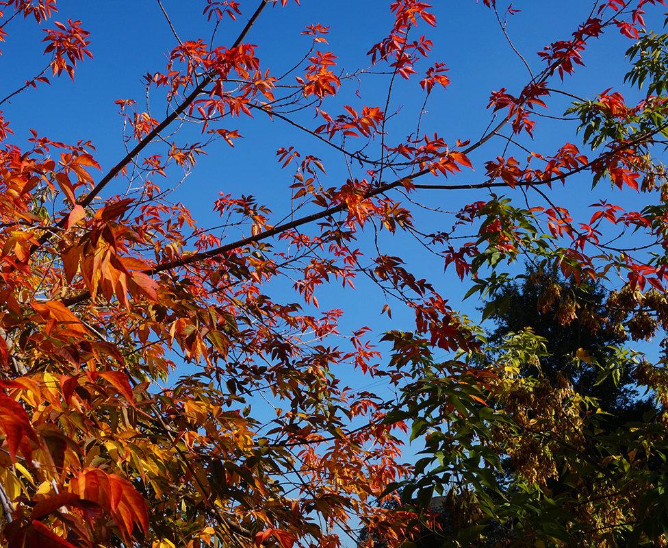 Яркие листья сентября - Екатерина Торганская