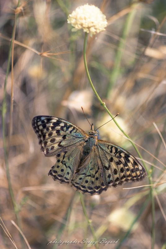 Бабочка - Sergey Bagach