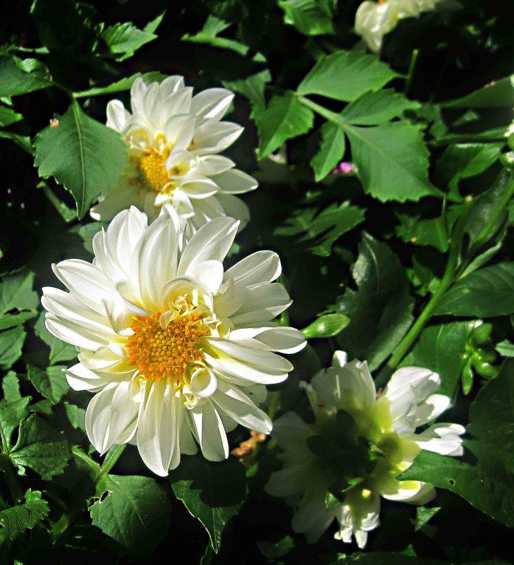 Цветы сентября - Елена Семигина
