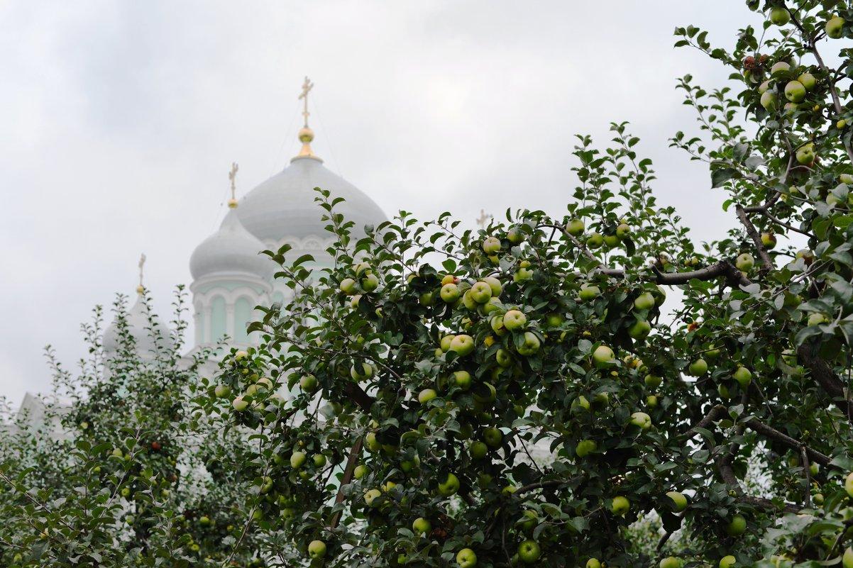 Дивеевские яблоки - Николай Варламов