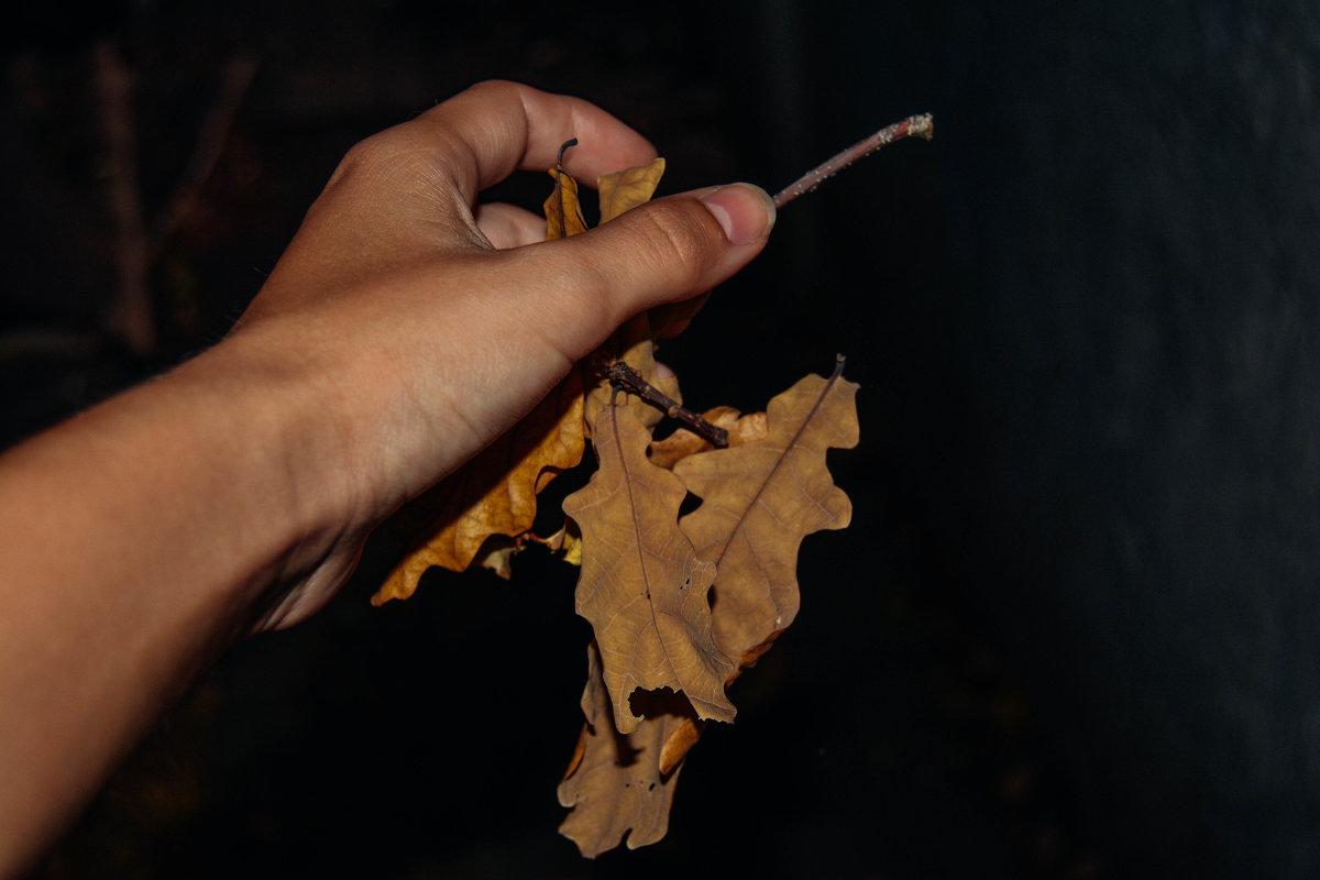 отпускаю осень из рук - Света Кондрашова