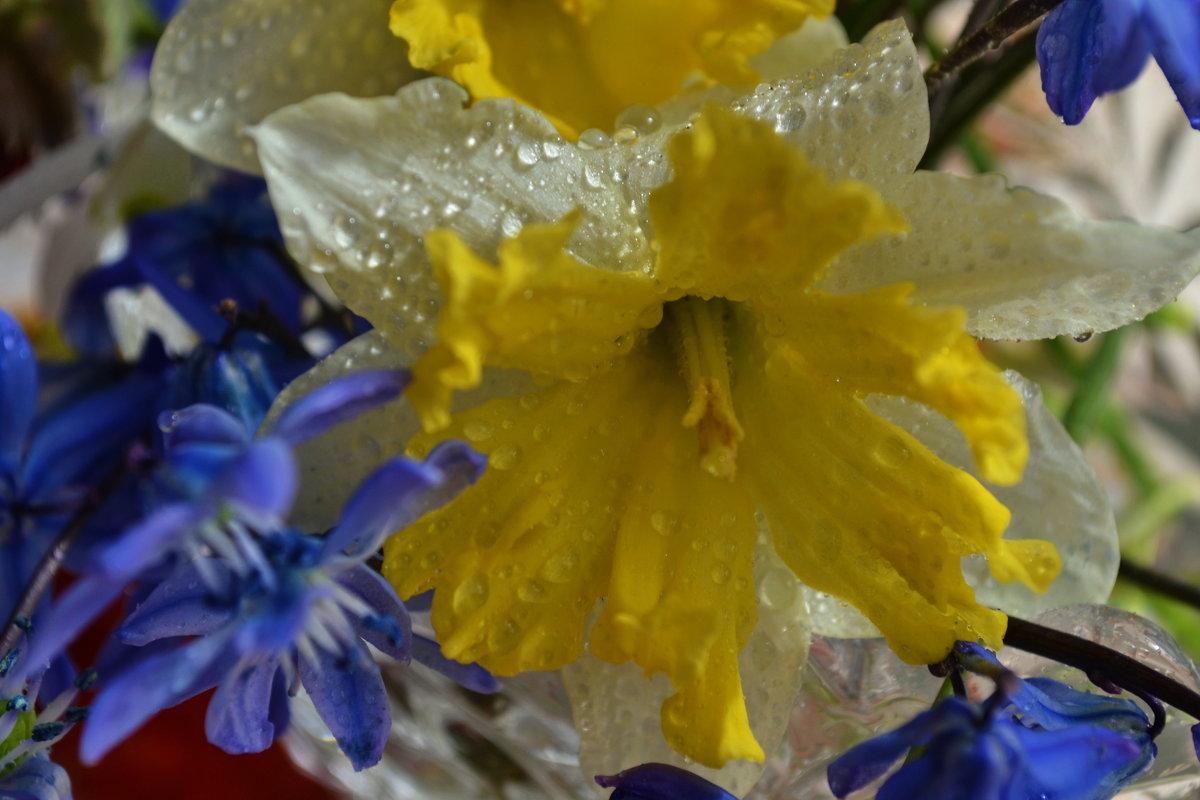 цветы - Светлана