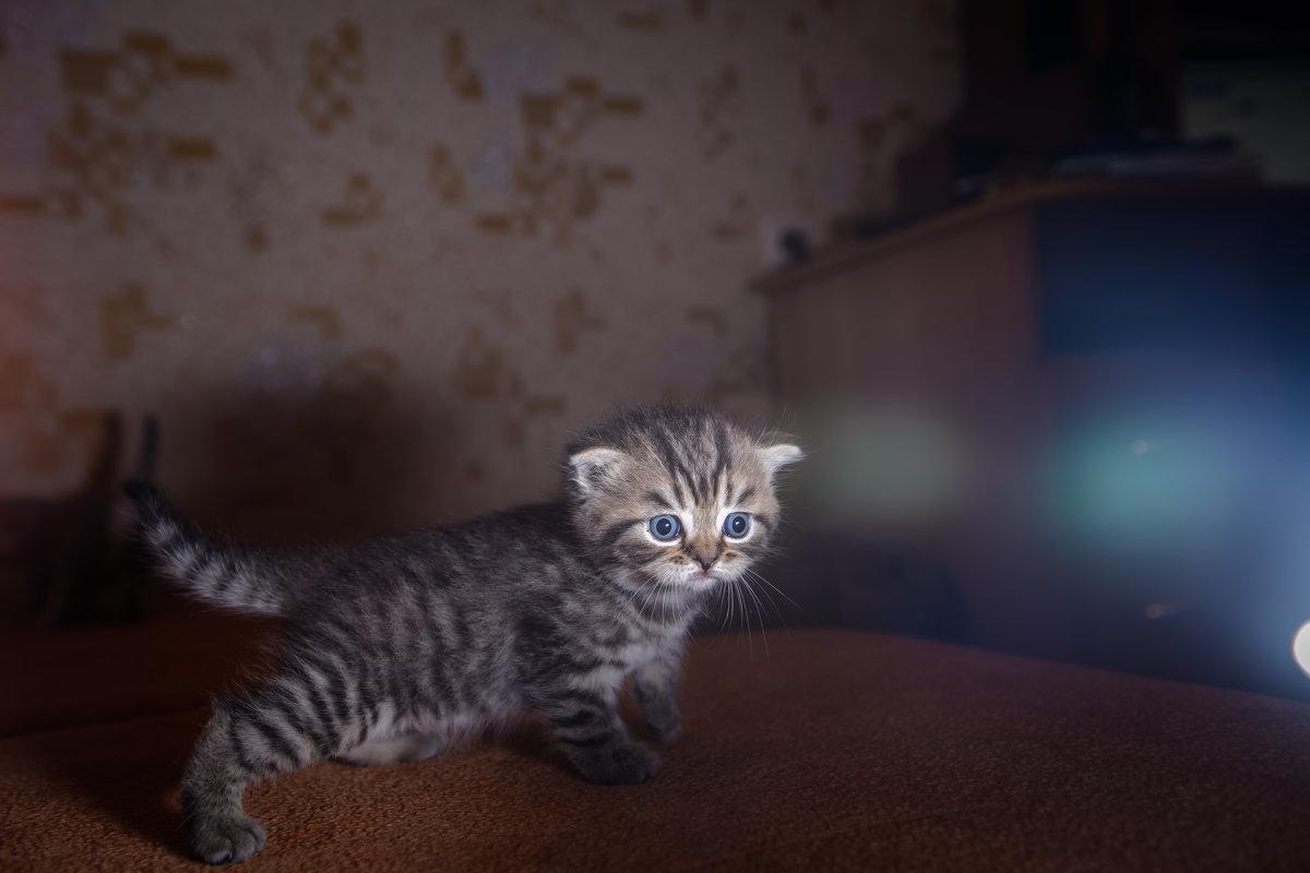 котенок - Ирина