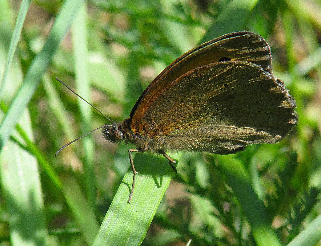 бабочка - Марина