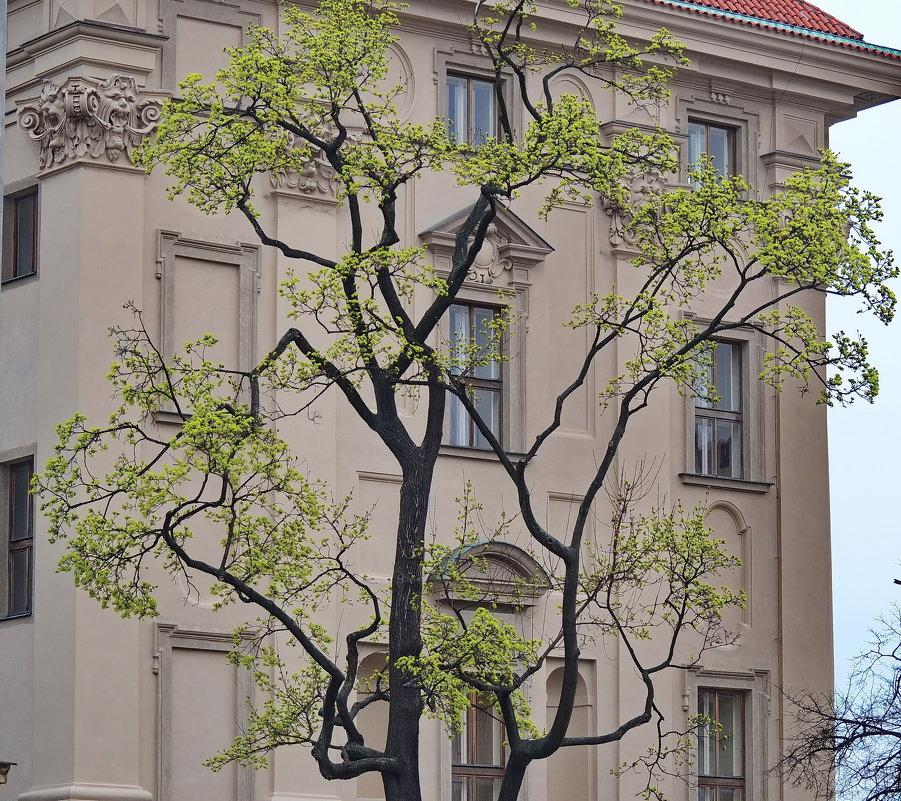 Прага, Градчаны - Владимир Брагилевский