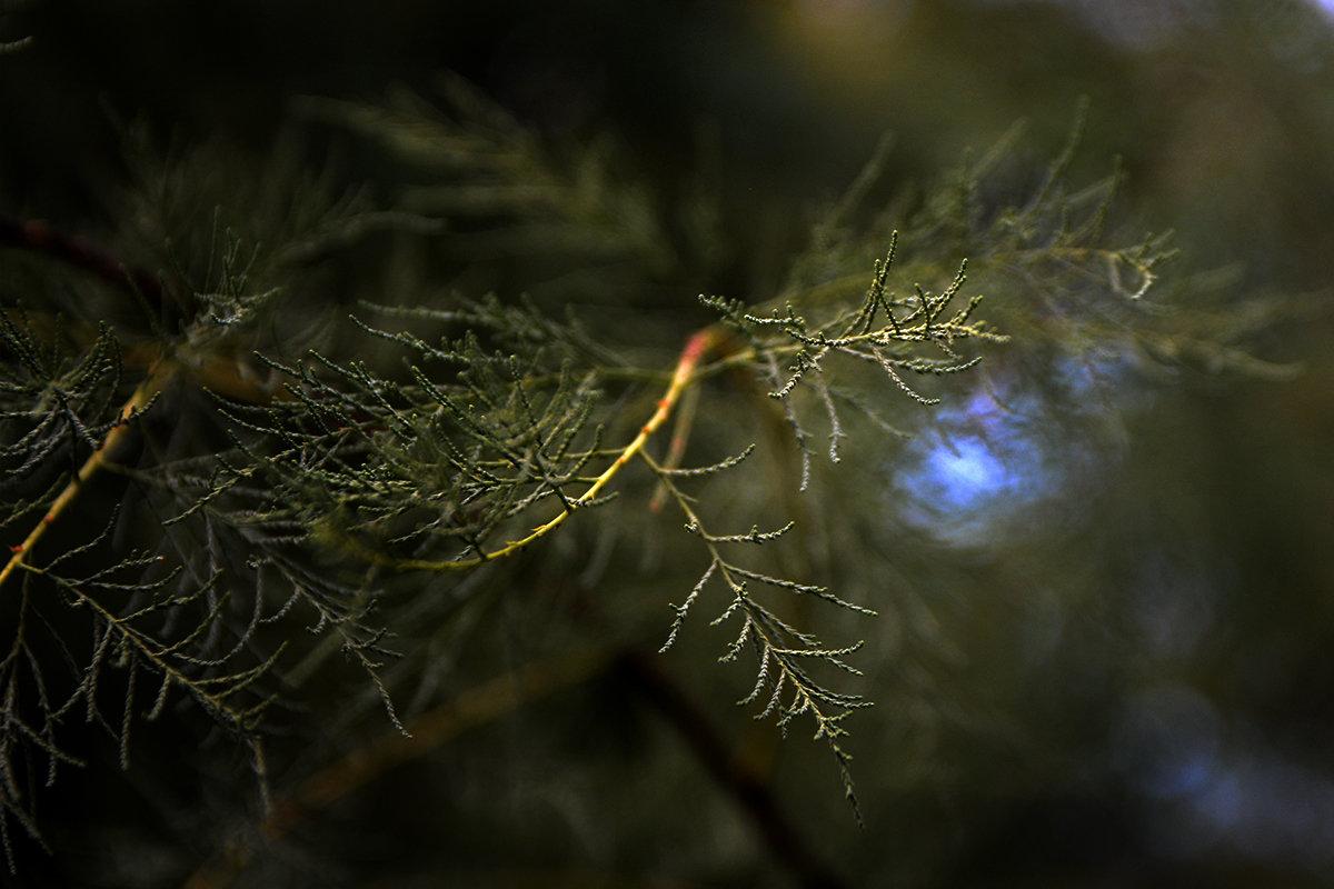 Природы маленький кусочек - Валерий Чернов