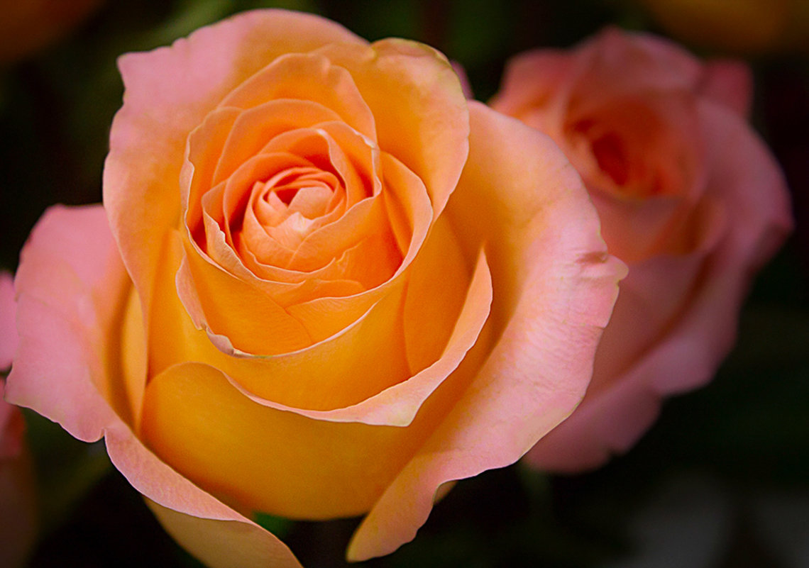 роза - Олег Белан