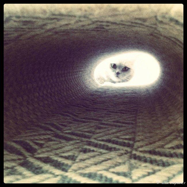 свет в конце тоннеля... - ака Японец