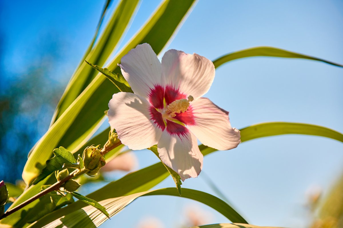 Цветок - Владимир