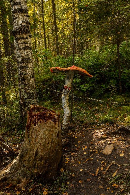 несьедобный гриб - Константин Шабалин