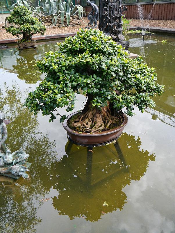 Бонсай в пруду - татьяна петракова