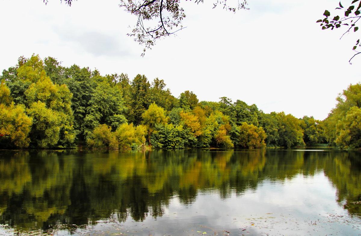 Осень отражается в воде. - Маргарита ( Марта ) Дрожжина