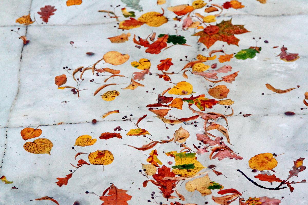 листья летнего сада... - Виктор Истомин