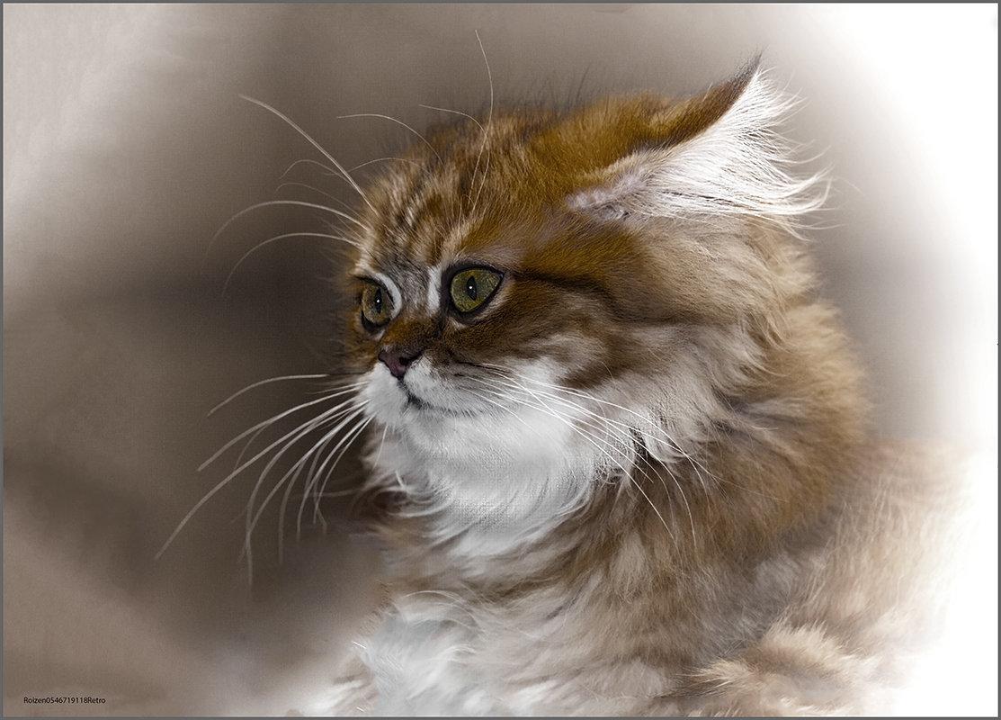 Шиншилла-из серии Кошки очарование мое! - Shmual Hava Retro