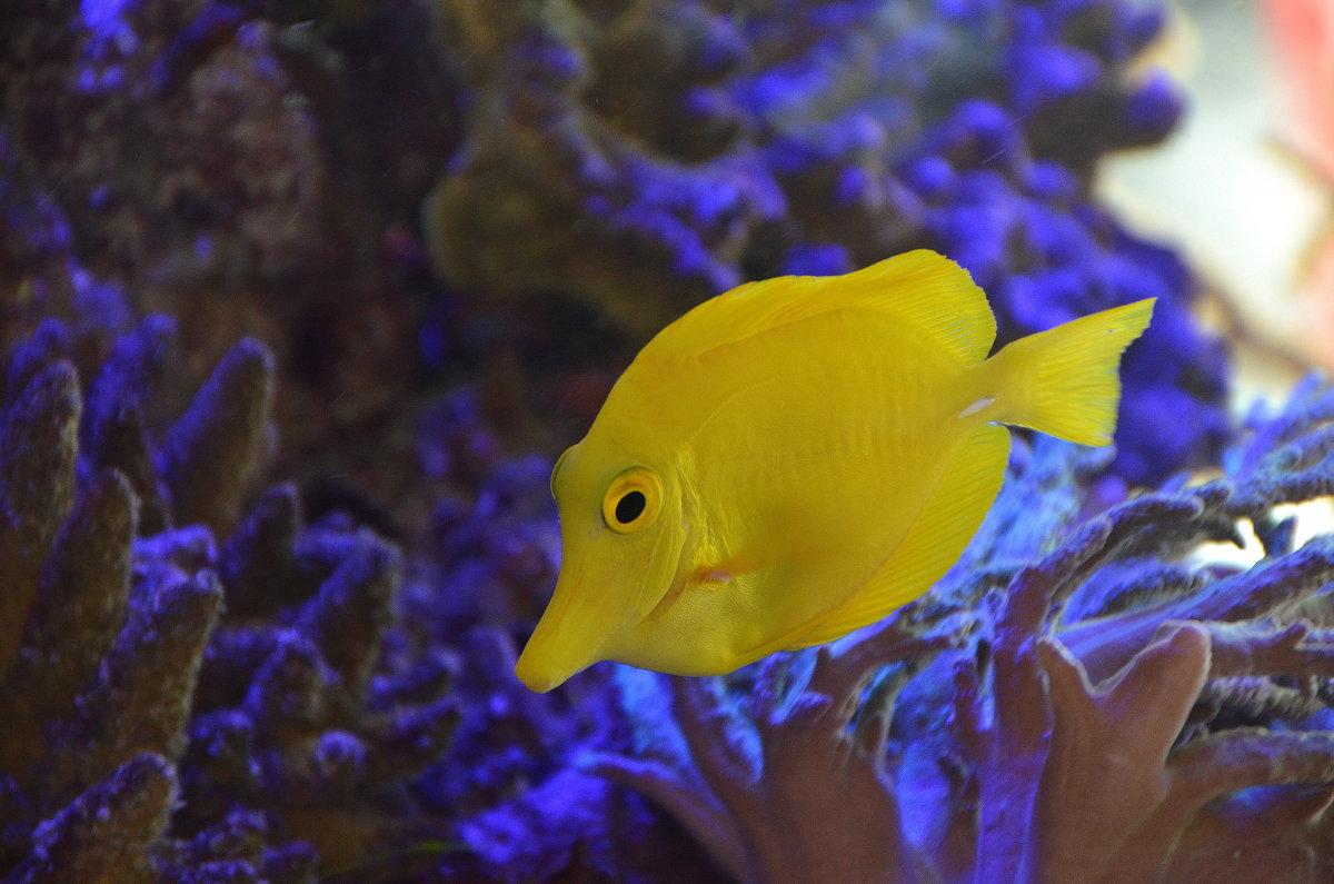 Рыбка в аквариуме. - Оля Богданович