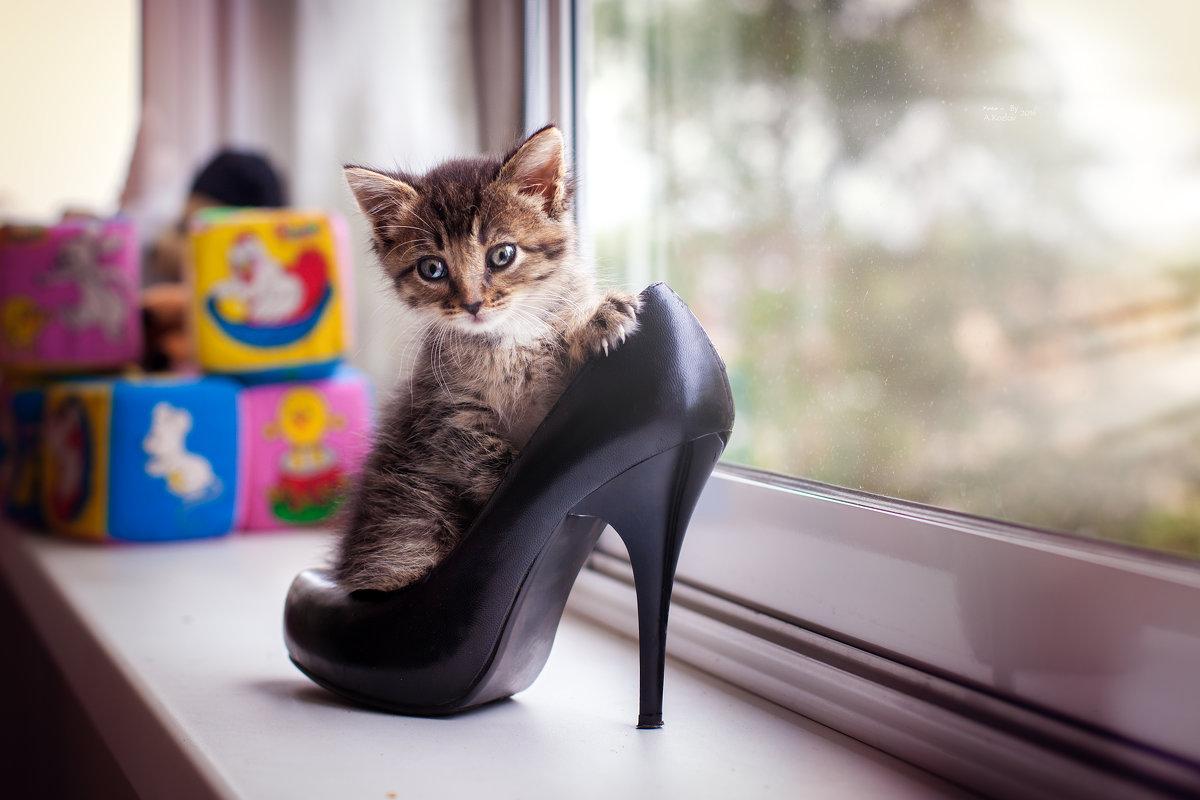 чей туфля - Андрей