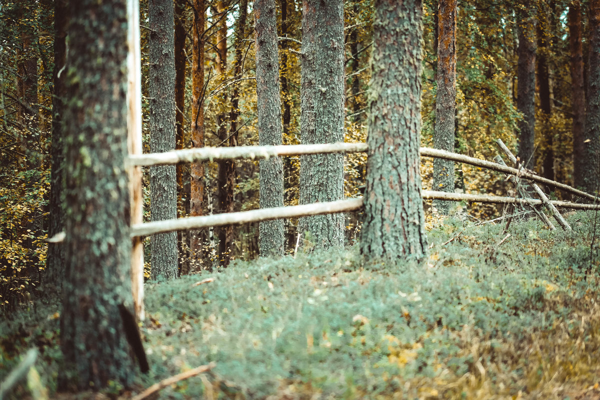 Осенняя прогулка - Паша