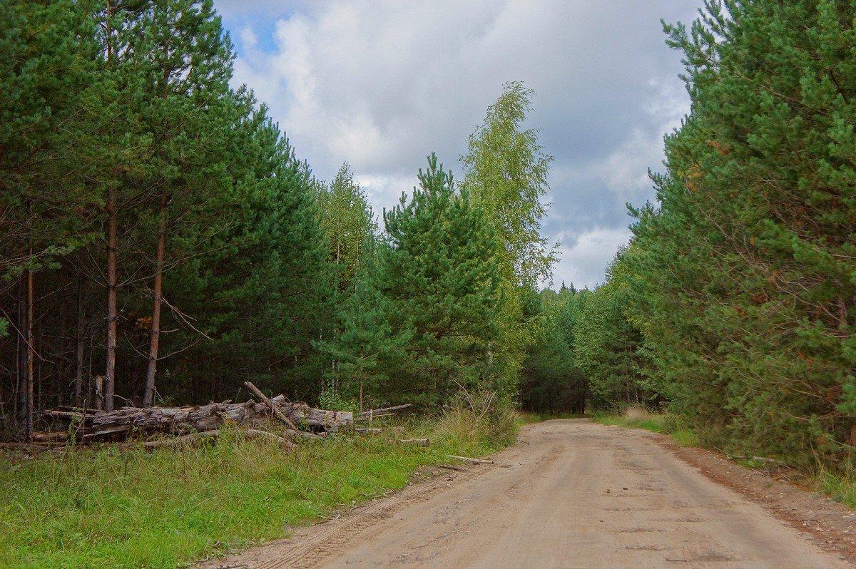 Дорога через лес... - марк
