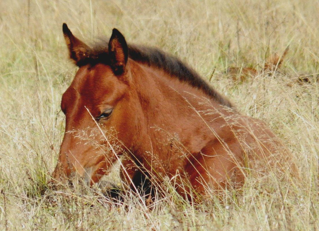 Жеребенок в осенней траве - Анна
